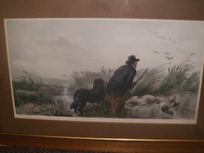 Richard Andsell R.a. 1815-1885 Large Duck Hunting Hand Coloured Engraving  C1852