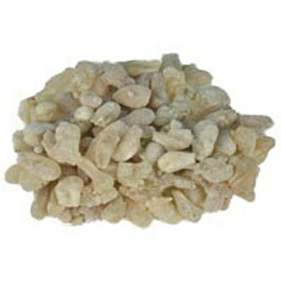 Light Colour Large Tears  of Frankincense Hojary from Oman - Boswellia Sacra