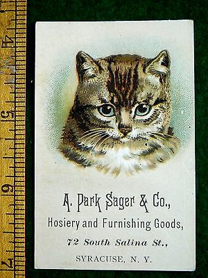 1880s Adorable Cute Tabby Cat Ribbon, A Park Sager & Co Hosiery Trade Card F32