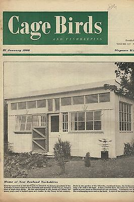 1960 21 JAN 53203 Cage Birds & Fishkeeping COVER HOME OF NEW ZEALAND YORKSHIRES