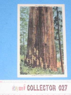 """Boy Scout Post Card """"The Boy Scout Tree""""  Redwood Highway California"""