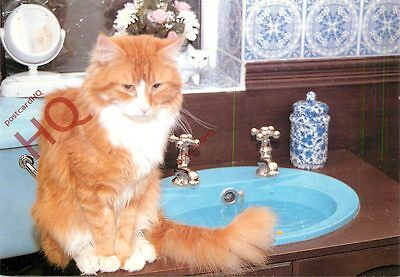 Postcard: Cat, Red Tabby And White Maine Coon