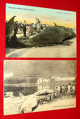 2 Antique Postcards Whales Washed Ashore - Asbury Park NJ / Azores of Portugal