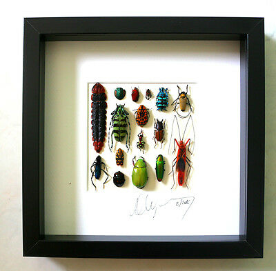 Wall art ,Taxidermy, home decor , gift : Framed insects signed by artist