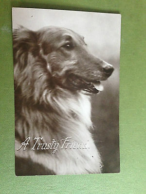 Dog A Trusty Friend Real Photograph Vintage Postcard
