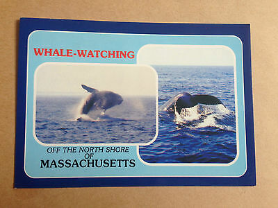Whale Watchingoff The North Shore Of Massachusetts Postcard