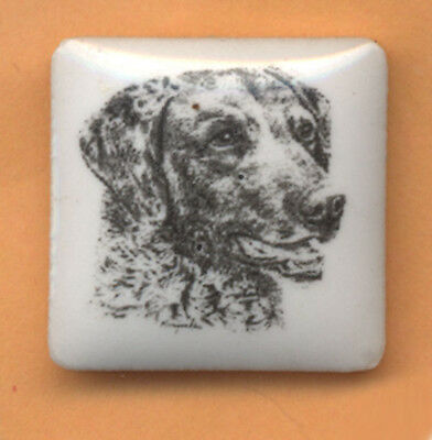 Chesapeake Bay Retriever ceramic  pin art by Monique Akar