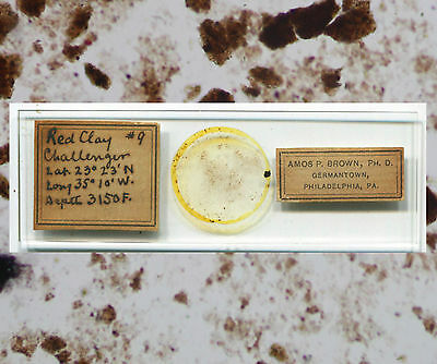 HMS Challenger Dredgings Microscope Slide - by Amos P. Brown