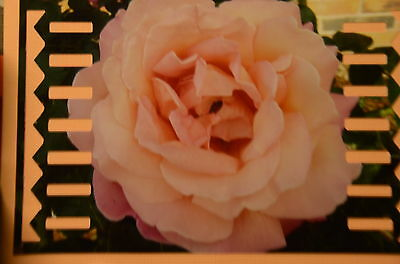 """For Creative Memories""""Pinking Edge"""" Border Maker Cartridge *Special Offer *!!!"""