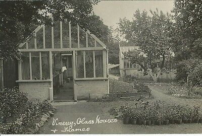 Social History, Clarke's Vinery, Glass Houses And Frames, Photo Postcard
