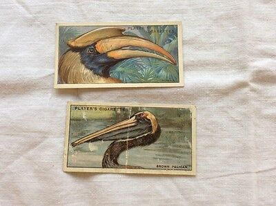 John Player cigarette cards. Curious Beaks. 2 cards only