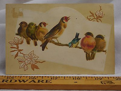 Embossed Woolson Spice & Co Lion Coffee Colorful Flock Of Birds Branch F42