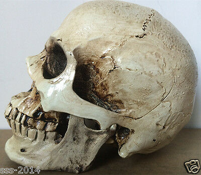 Hot Resin Replica Life Human Skull Model Medical Anatomy Halloween Collectable