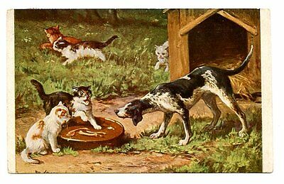 vintage cat postcard angry cats hiss at dog w plate of bones 1906
