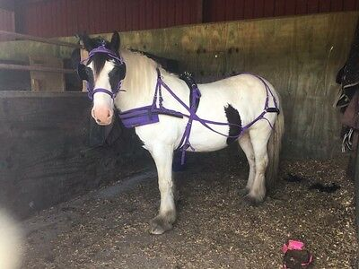 Purple Driving Harness - Cob Size