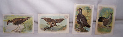 4-1900-1915 Arm & Hammer Trade Cards-Birds-Baking Soda