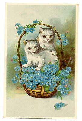 vintage cat postcard sweet grey cats in basket of forget me not flowers