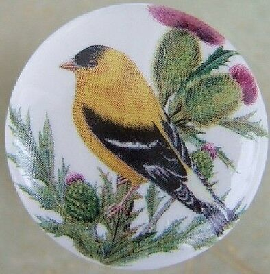 Cabinet Knobs Domestic bird Gold Finch Goldfinch Thistle
