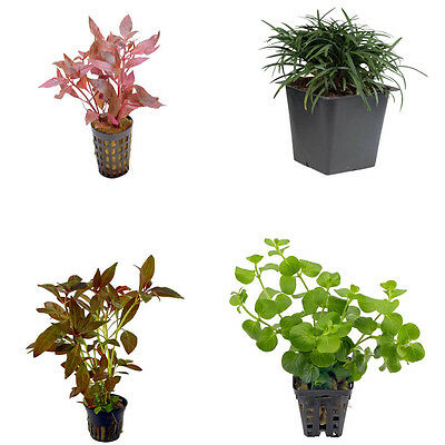 Special Assortment Nr 3 - Aquatic / Terrarium Plants 20 Pots