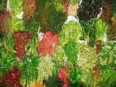 Bunch Assortment - Nursery Choice (S / M / L Sizes, Total 100 Leaded Bunches)