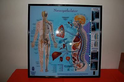 Large Chiropractic Neuropatholator Chiropractor Rare Sold Out!!!