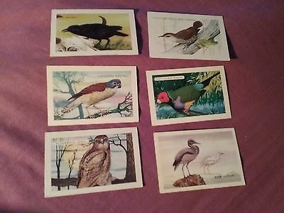 Shell cards x6 set 2