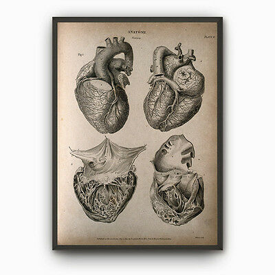 Vintage Heart Anatomy Canvas Art Poster Antique Heart Diagram Human Biology