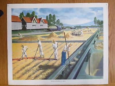 VINTAGE CLASSROOM POSTER 1950s Drying Coffee Beans Brazil M Tatchell Macmillans