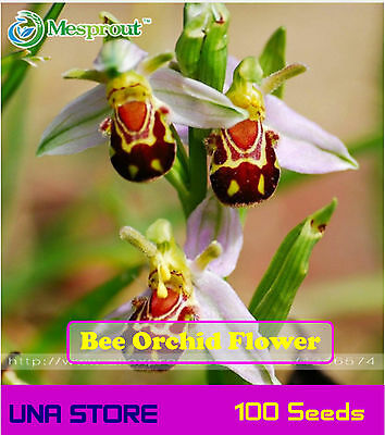 Bee Orchid Flower - China Rare Flower (100 seeds)