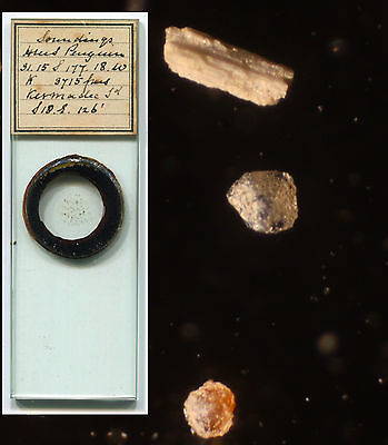 HMS Penguin Ocean Floor Soundings Microscope Slide