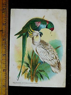 1870s-80s Ring Parrakeet & Sulphur Crested Cockatoo Victorian Card Birds F34