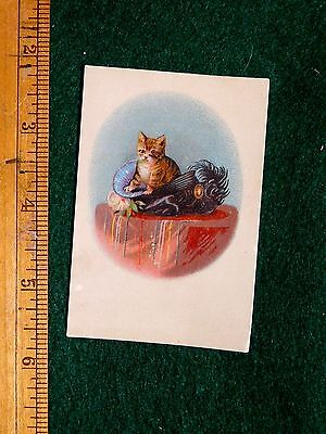 1870s-80s Cute Cat Kitten In Fancy Feather Hat Victorian Card F34