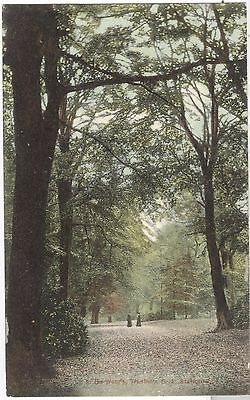In The Woods, Trentham Park, Staffordshire nr. Stoke-on-Trent