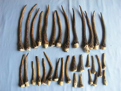 SET OF 33 PIECES EUROPEAN RED STAG ANTLERS 68.94 oz  taxidermy skull head