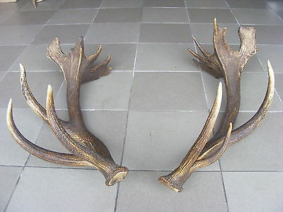 GREAT PAIR OF EUROPEAN RED STAG ANTLERS 12 lb 11.38 oz taxidermy skull hunting