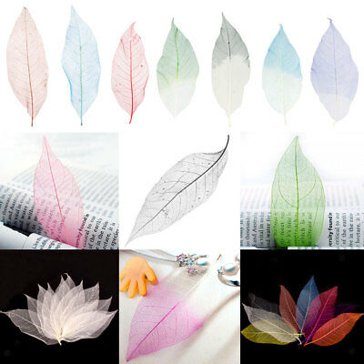 50x Natural Magnolia Skeleton Leaves Card Making Scrapbooking Multicolor
