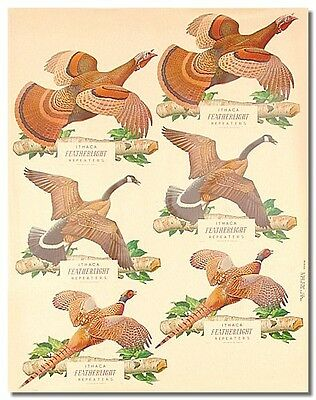 6 Vintage Images GAME BIRDS Advertising Ithaca Repeaters 1957 Store Sign Poster
