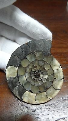 Authentic Natural Fossil Ammonite - 59 gm