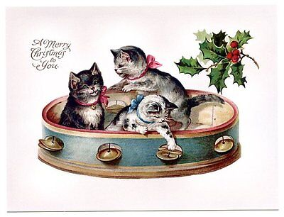 modern cat postcard Maguire cute cats sit in large tambourine Christmas holly