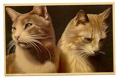 vintage cat postcard beautiful pair golden ginger cats