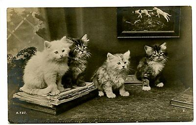 vintage cat postcard real photo cute cats kittens sat on books papers 1912