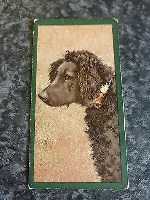 TADDY & Co. CIGARETTE CARDS FROM DOGS SERIES 1900 No.8 FRENCH POODLE