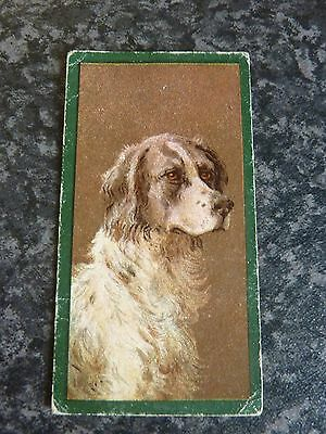 TADDY & Co. CIGARETTE CARDS FROM DOGS SERIES 1900 No.15 ENGLISH SETTER