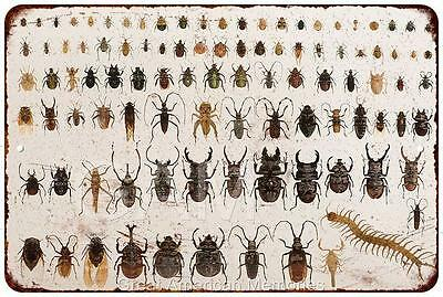 Insect Collection Pin Board Vintage Look Reproduction 8x12 Metal Sign 8121232