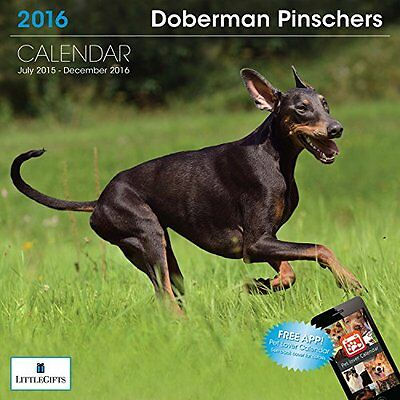 Little Gifts LittleGifts Doberman 2016 Calendar (1239)