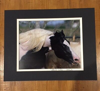 Stallion Paint Horse Photo Original Matted Signed