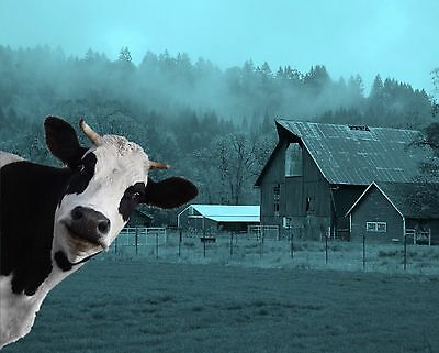 Teal Black White Cow Farm Art Photobomb Photo Print Wall Art Picture Matted