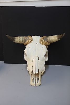 Cow skull with horns and teeth/Rope- Preserved Taxidermy Western Vintage