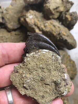 ***RICH*** Lance Creek Fm. Micro Matrix - Eastern Wyoming *Limited Supply*