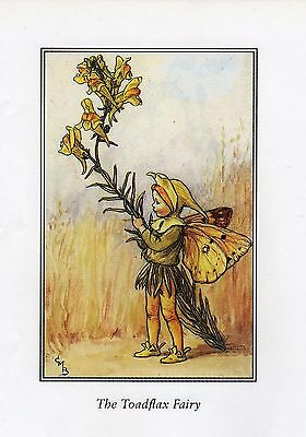 FLOWER FAIRY CICELY MARY BARKER ORIGINAL 70's BOOKPRINT harebell/toadflax